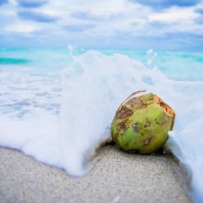 Doftolja - Cuba Coconut Water